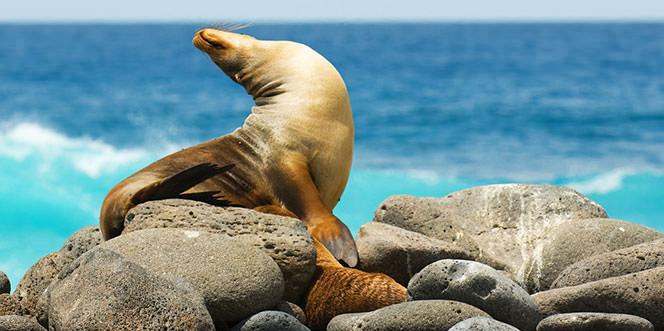 Descubra Galapagos