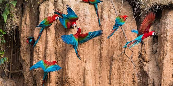Perú Diversidad 2015 15D