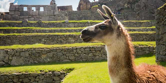 Peru Millenary And Nature